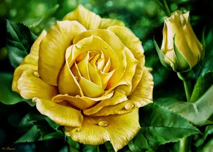 Купить картину по номерам Желтая роза (RDG-2437 ...